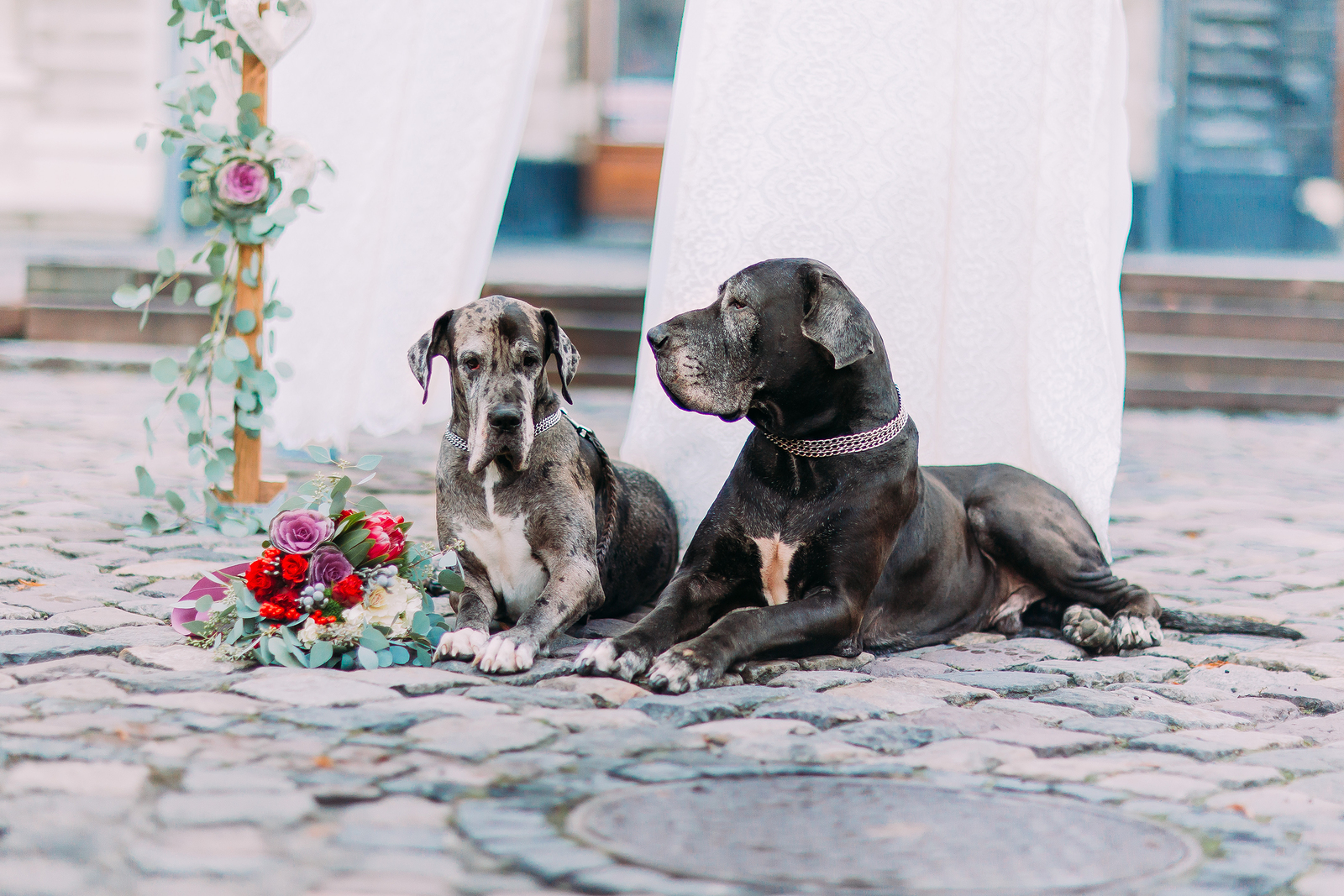 5 Ways to Include Your Pet in Your Wedding Day